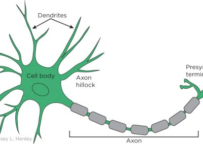 Typical neuron (green)